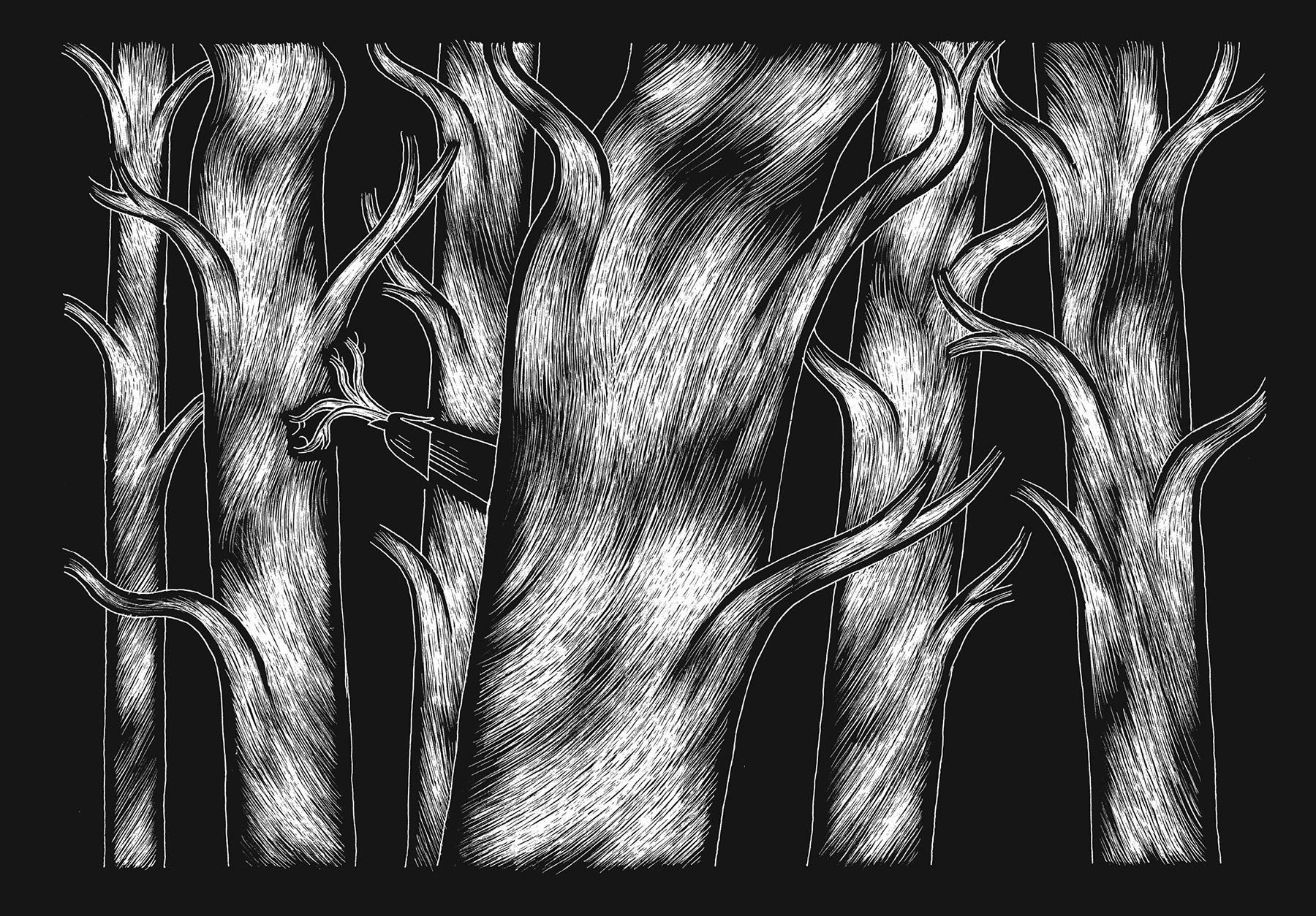 davidm-arboreal-web_expanded-7.jpg