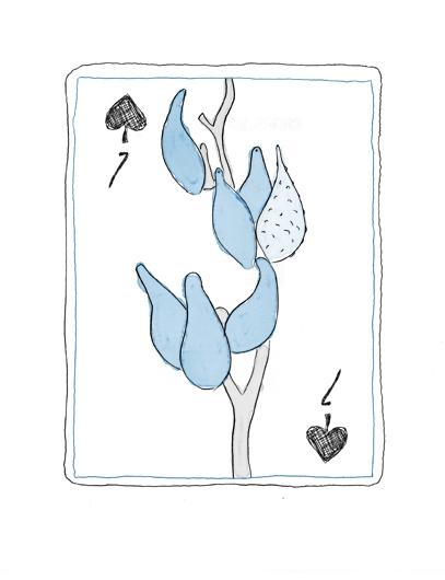 Seven little milkweed pods!