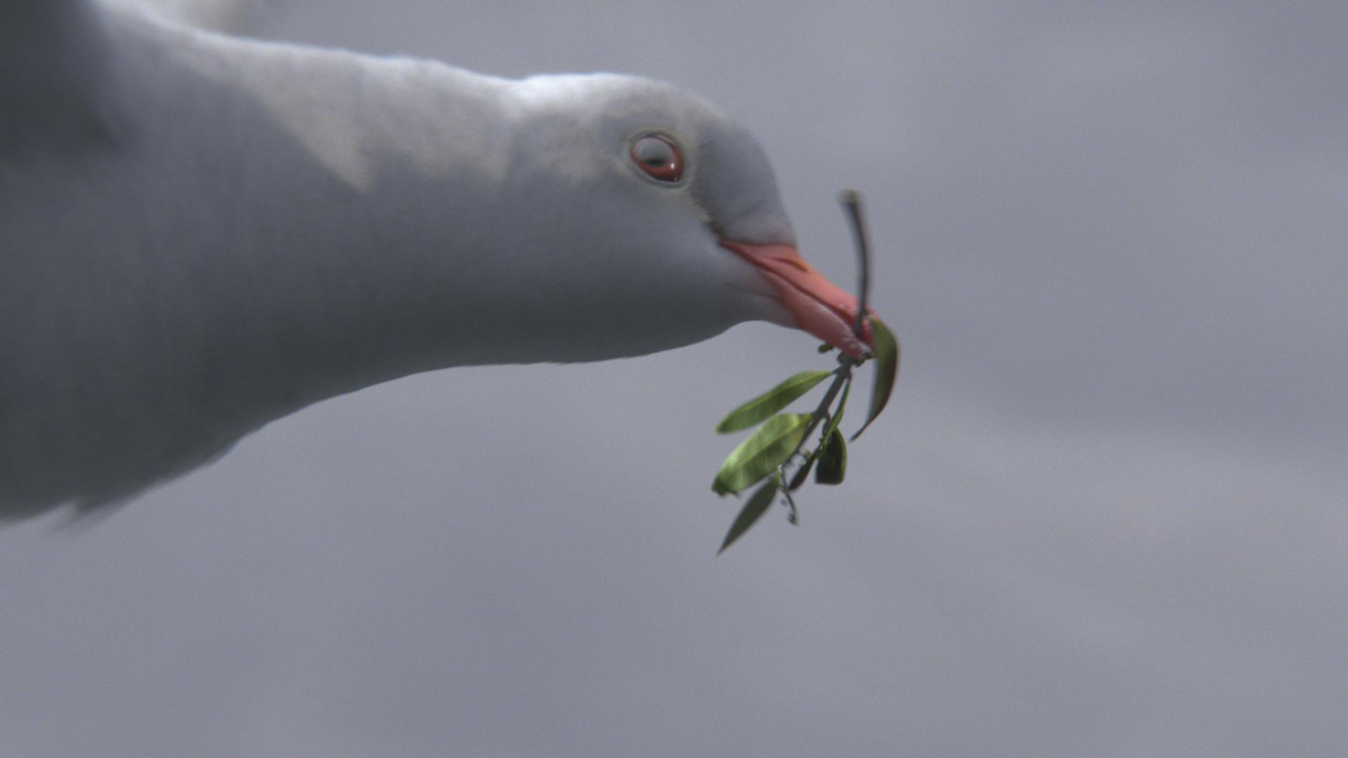 The Birds of Noah: Animation Reel