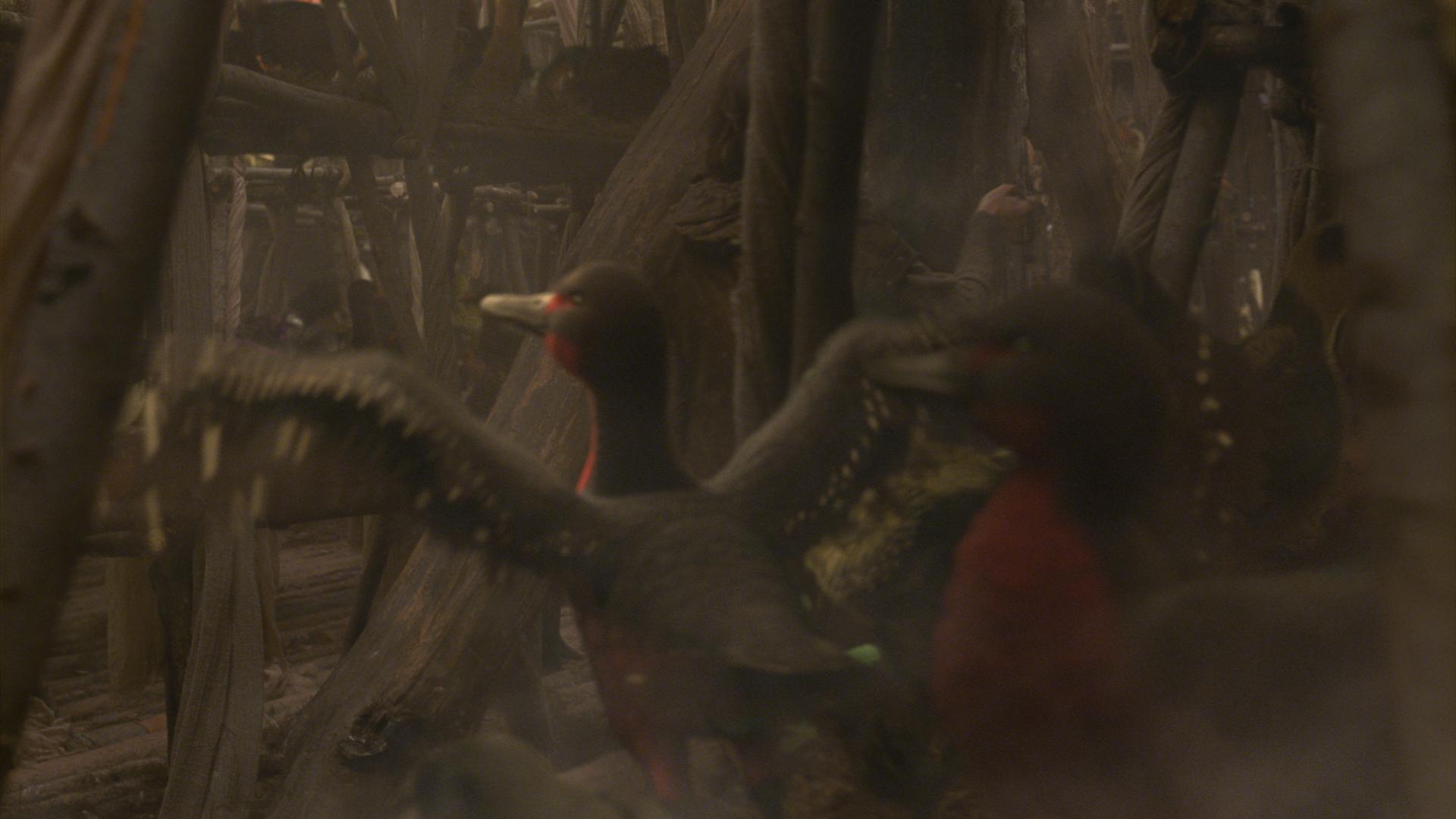 The Birds of Noah: