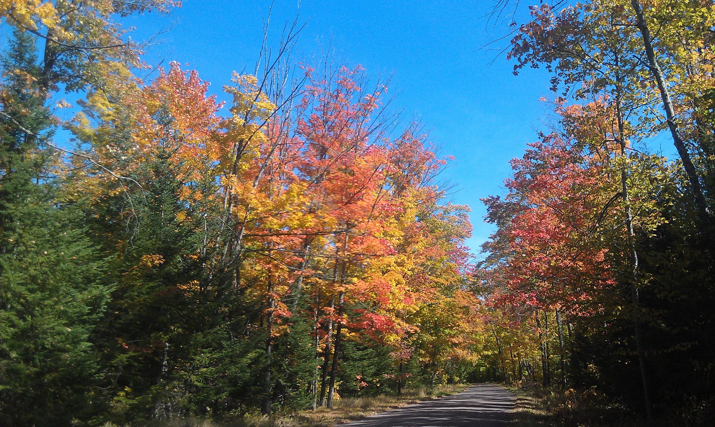 fall colors1.jpg