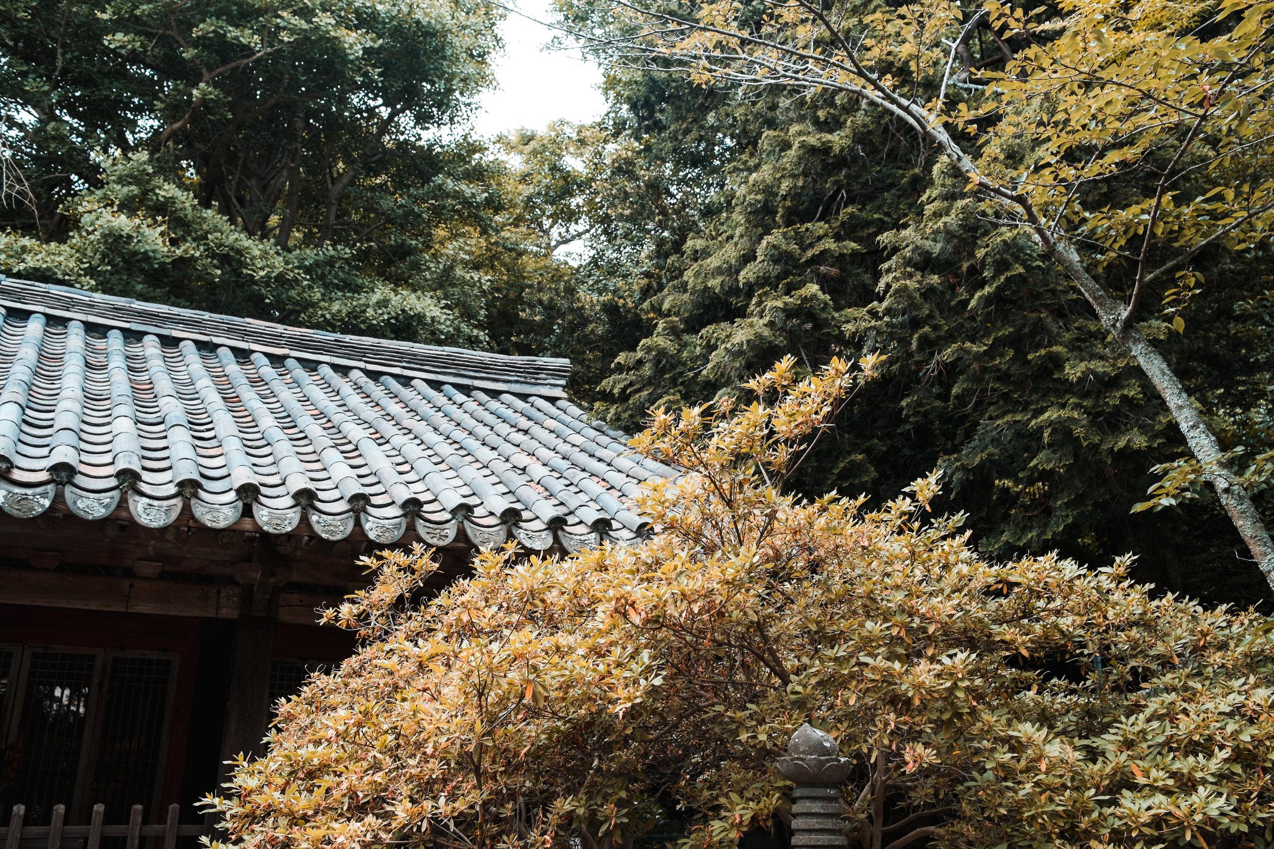 TokyoJapan_2018_AdamDillon_DSCF9563.jpg