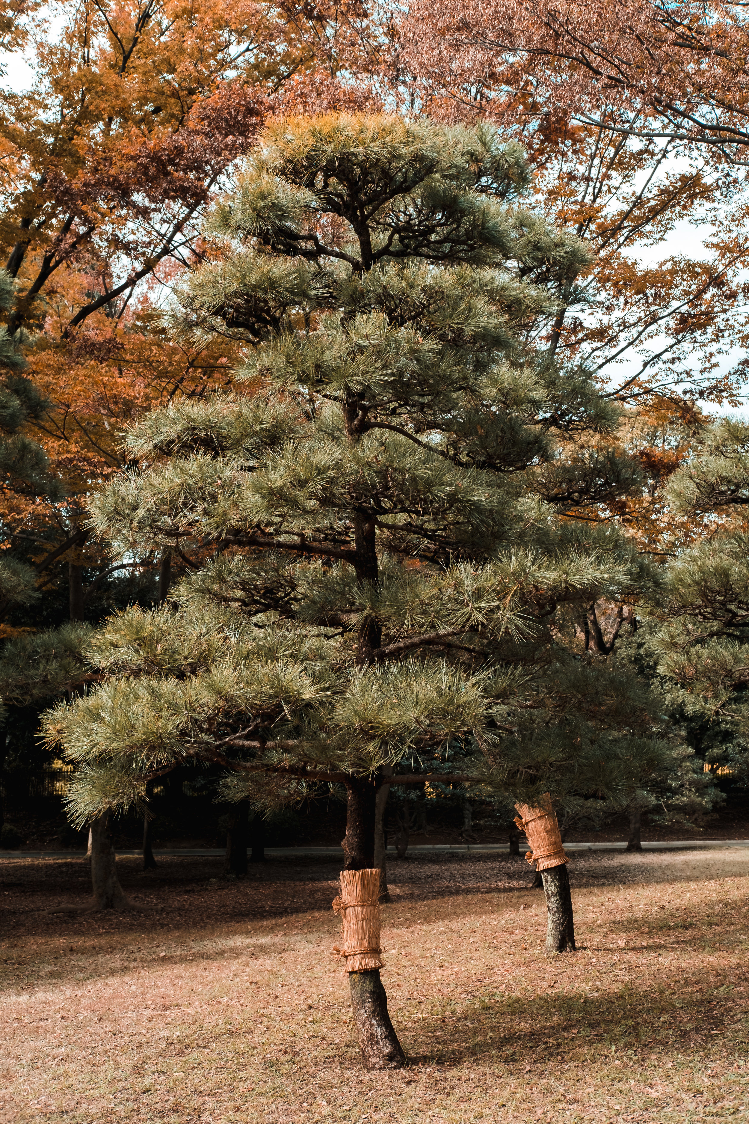 Tokyo_Nov_2018_AdamDillon_DSCF1138.jpg