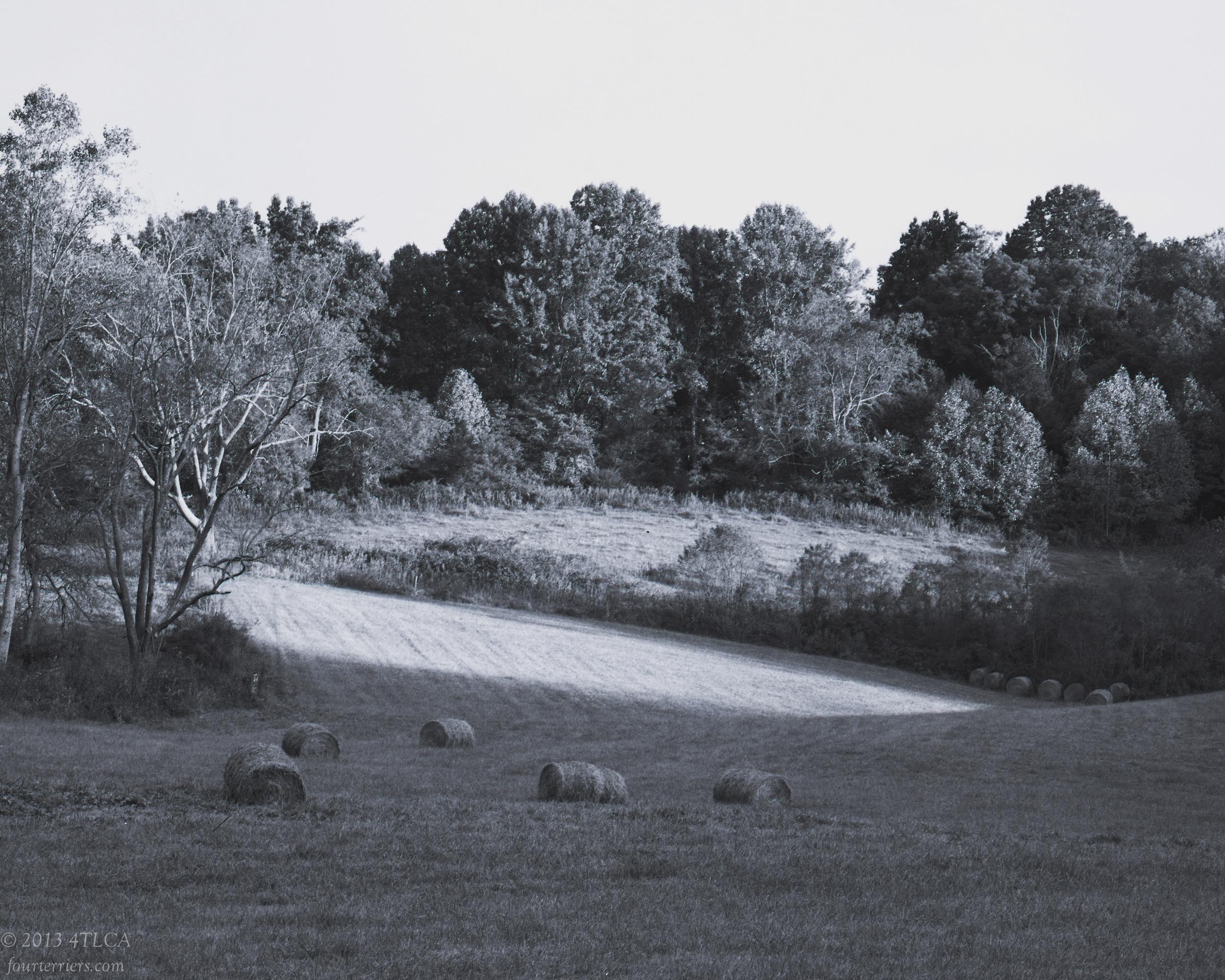 A Field in Washington County, Virginia