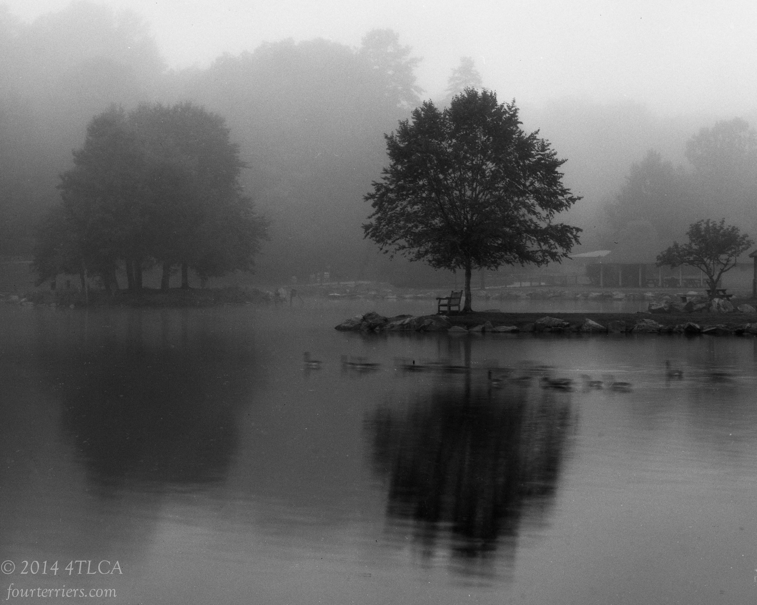 Quiet Morning