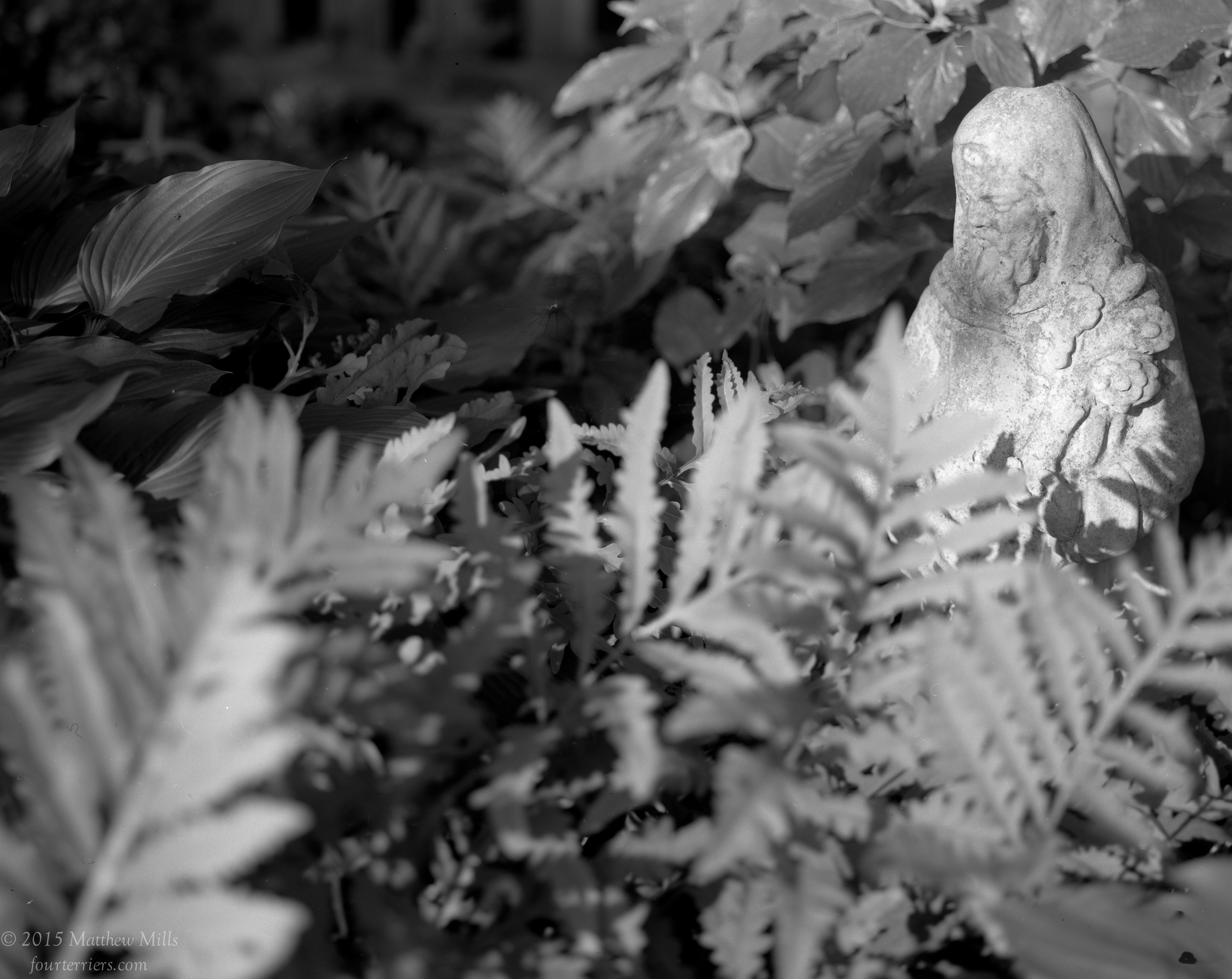 Saint Fiacre Among the Ferns