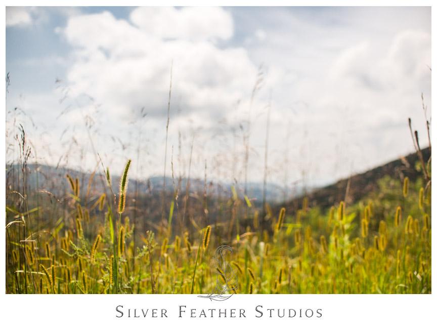 Skyline Drive and Shenandoah National Park in Virginia