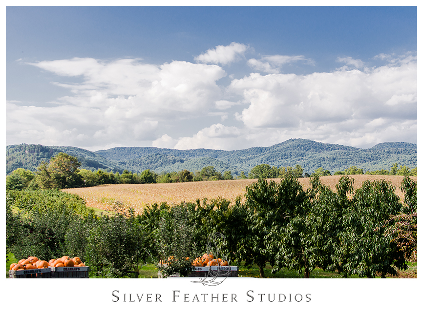 Stunning mountain views in Hendersonville, NC at Granddad's Apple Orchard. © Silver Feather Studios, North Carolina Wedding Photography & Videography