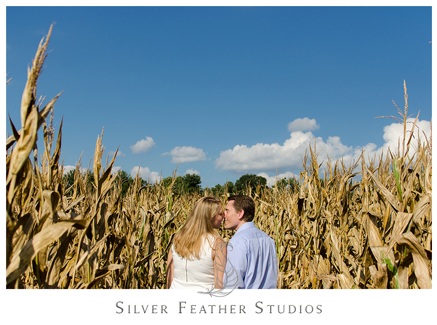 North Carolina engagement photography in the corn fields in Hendersonville, NC.   © Silver Feather Studios, North Carolina Wedding Photography & Videography