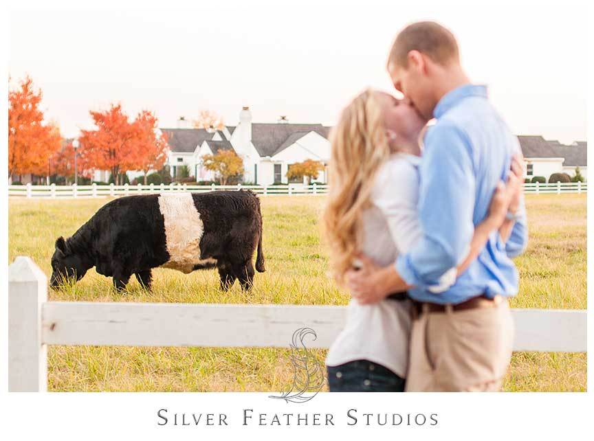 Oreo cows make a fabulous backdrop for this Fearrington Village engagement session. © Silver Feather Studios, Chapel Hill Wedding Videography and Photography