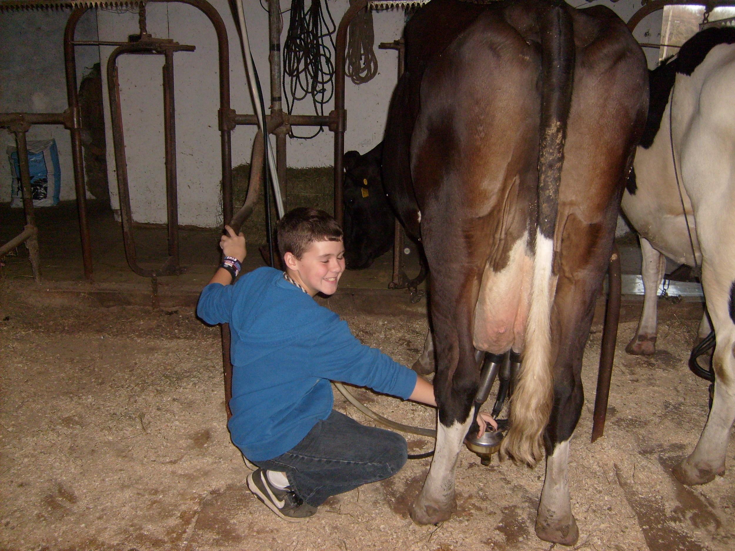 boy_milking_cow.JPG