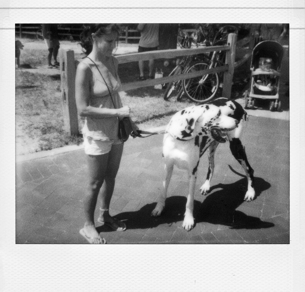Big Doggy