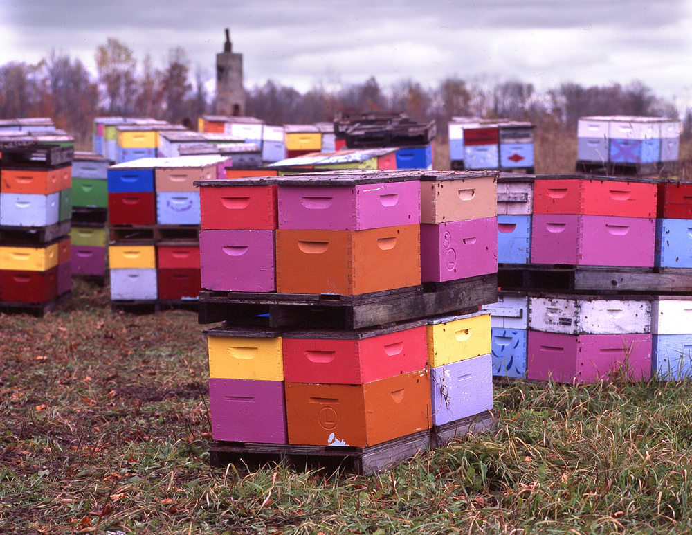 Colored Hives