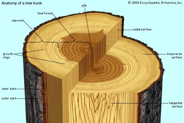 Anatomy of a log