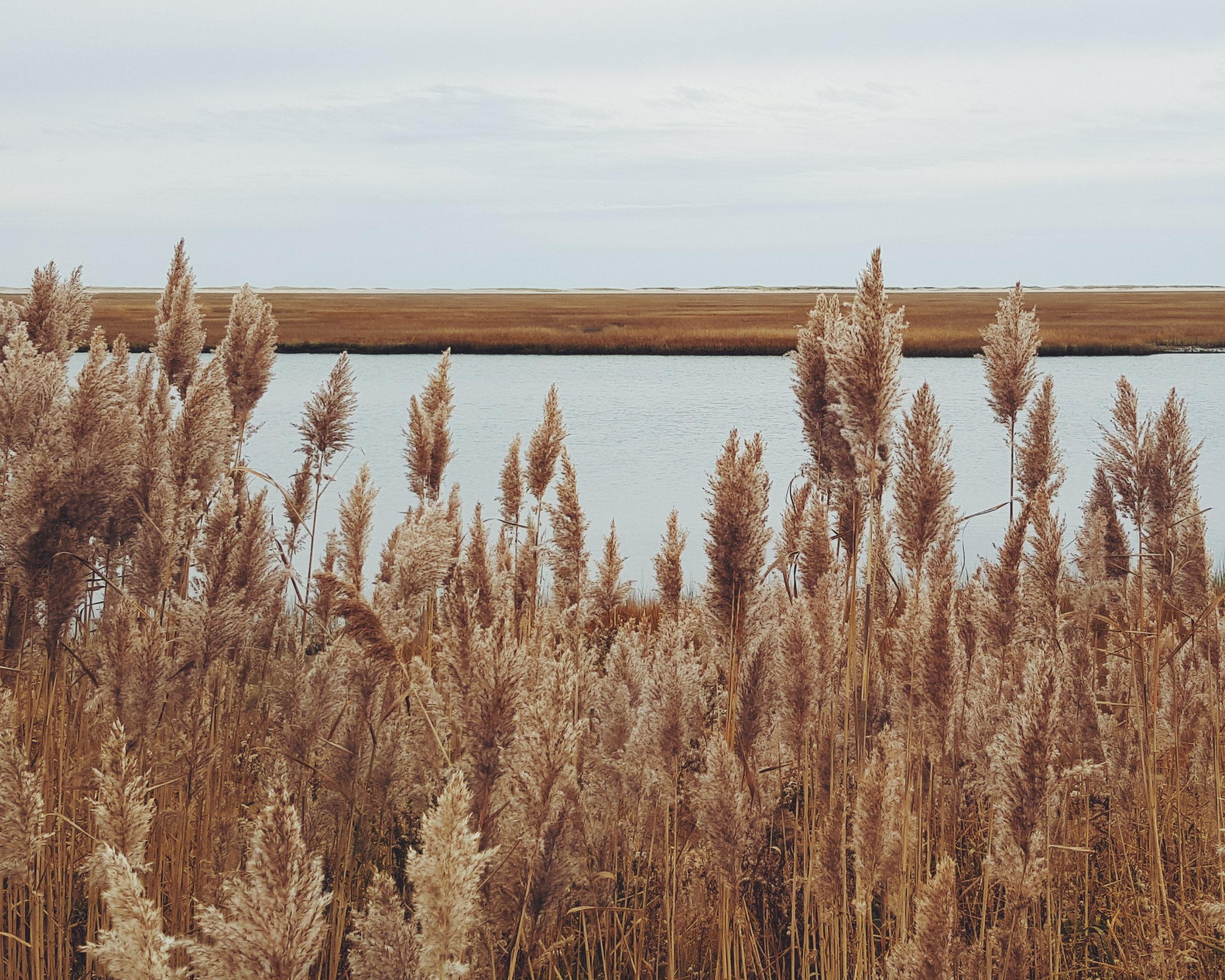 Cape Cod National Seashore in Eastham.