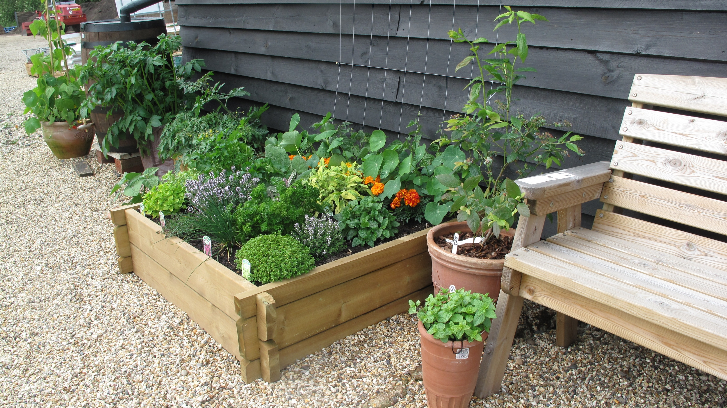 herbs with bench.JPG