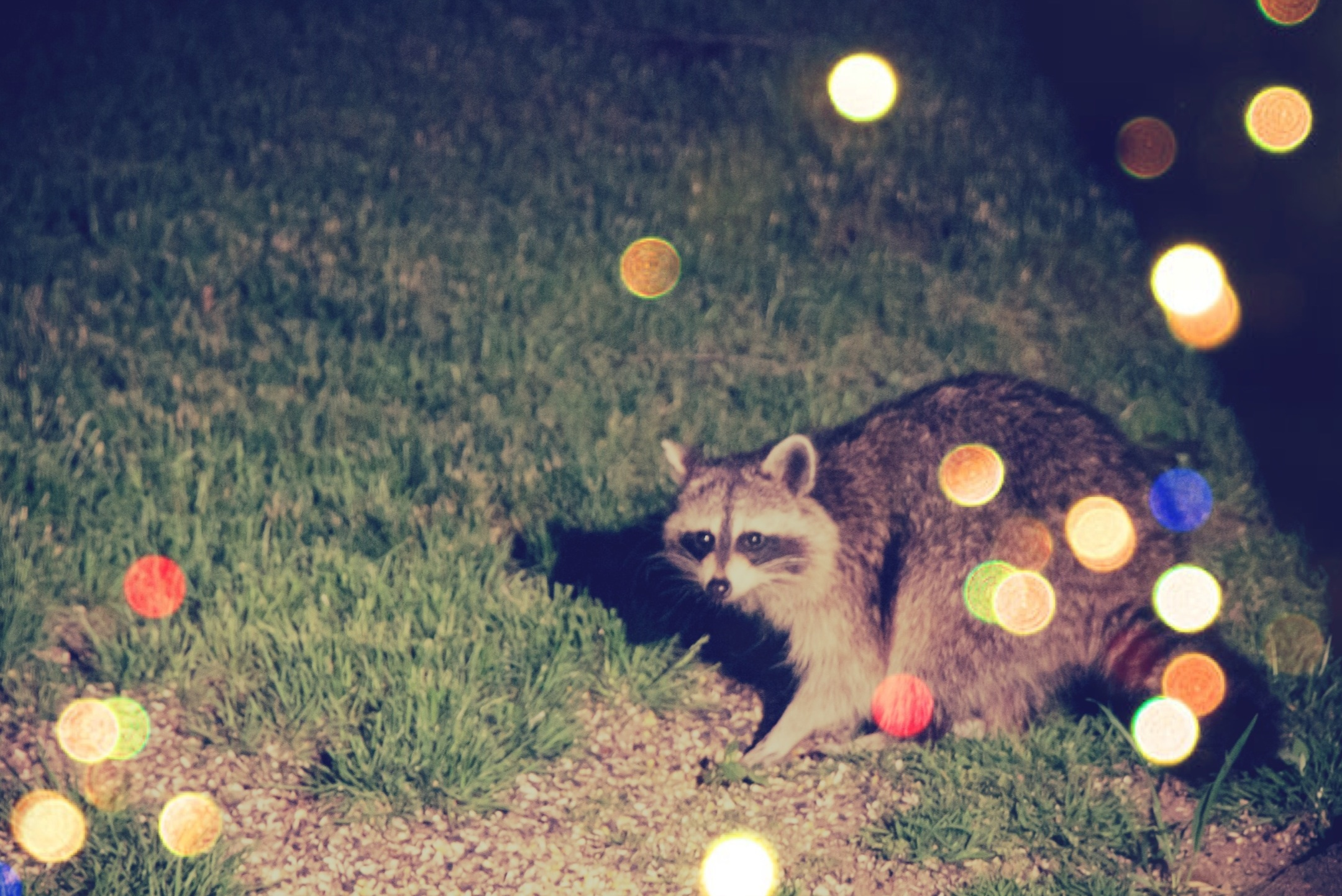 party-raccoon.JPG
