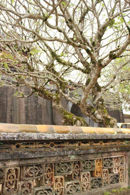 Fence & tree.jpg