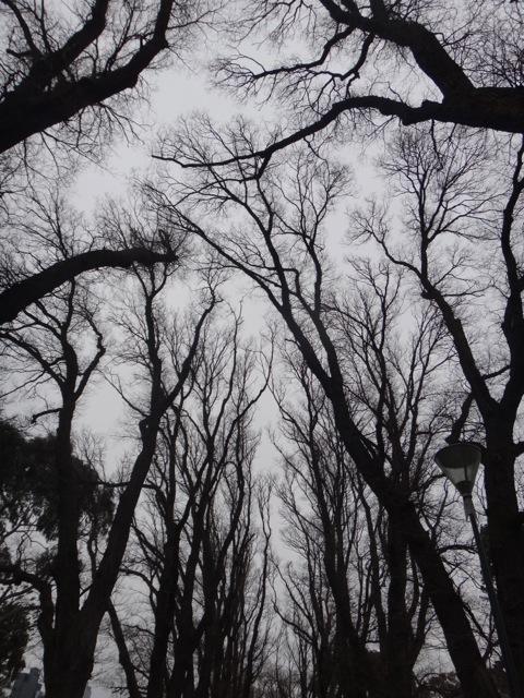 Melb tree 2.jpg
