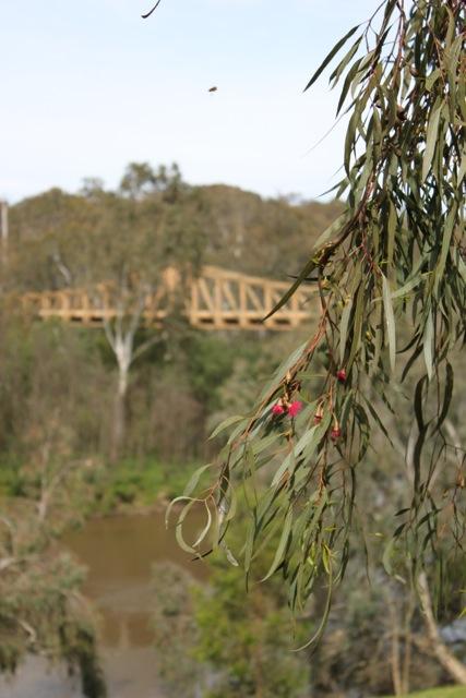 Yarra River 1.jpg