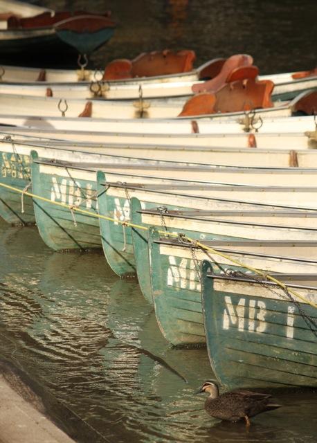 Fairfield boats.jpg