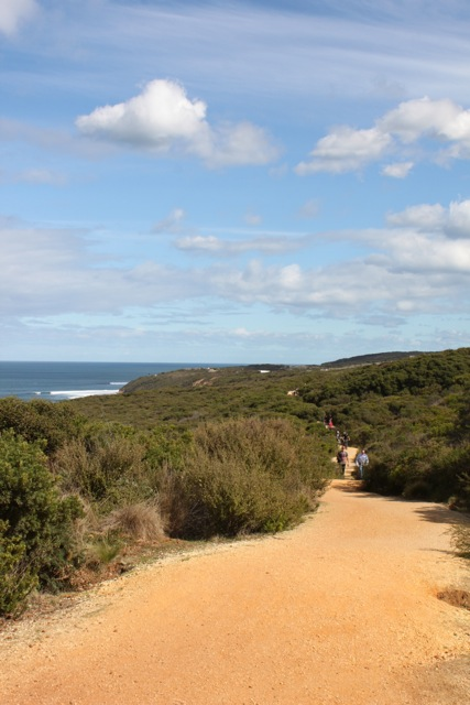 The coastal trail to Bells Beach - great for walking or biking