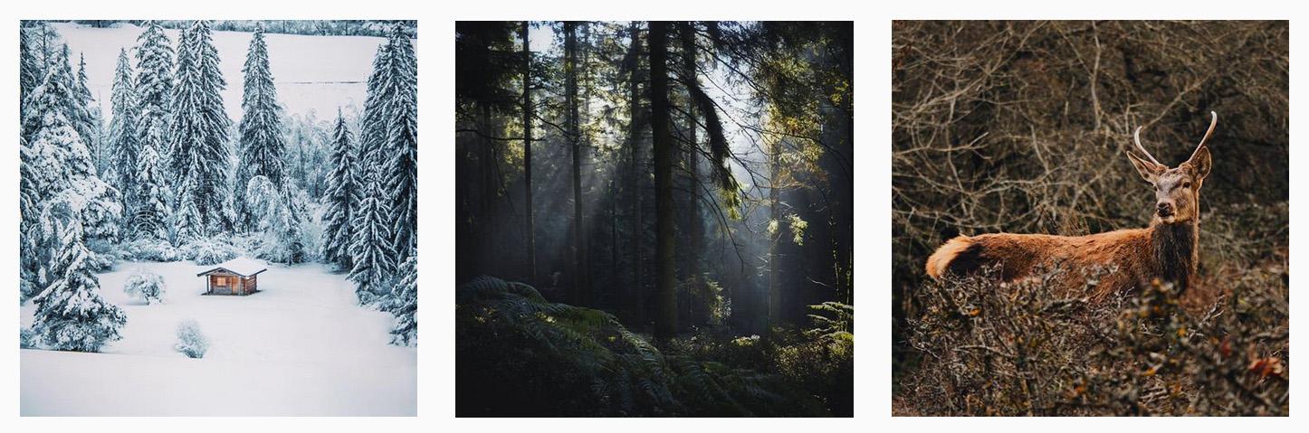 foresthashtag.jpg