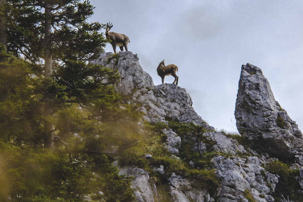 Respect Wildlife - Don't approach animals. Both you and the wildlife will enjoy encounters more if you master the zoom lens on your camera and pack along a pair of binoculars.
