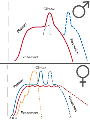 Avril1975 [Public domain], via Wikimedia Commons. Sexual response cycle as first described by Masters and Johnson