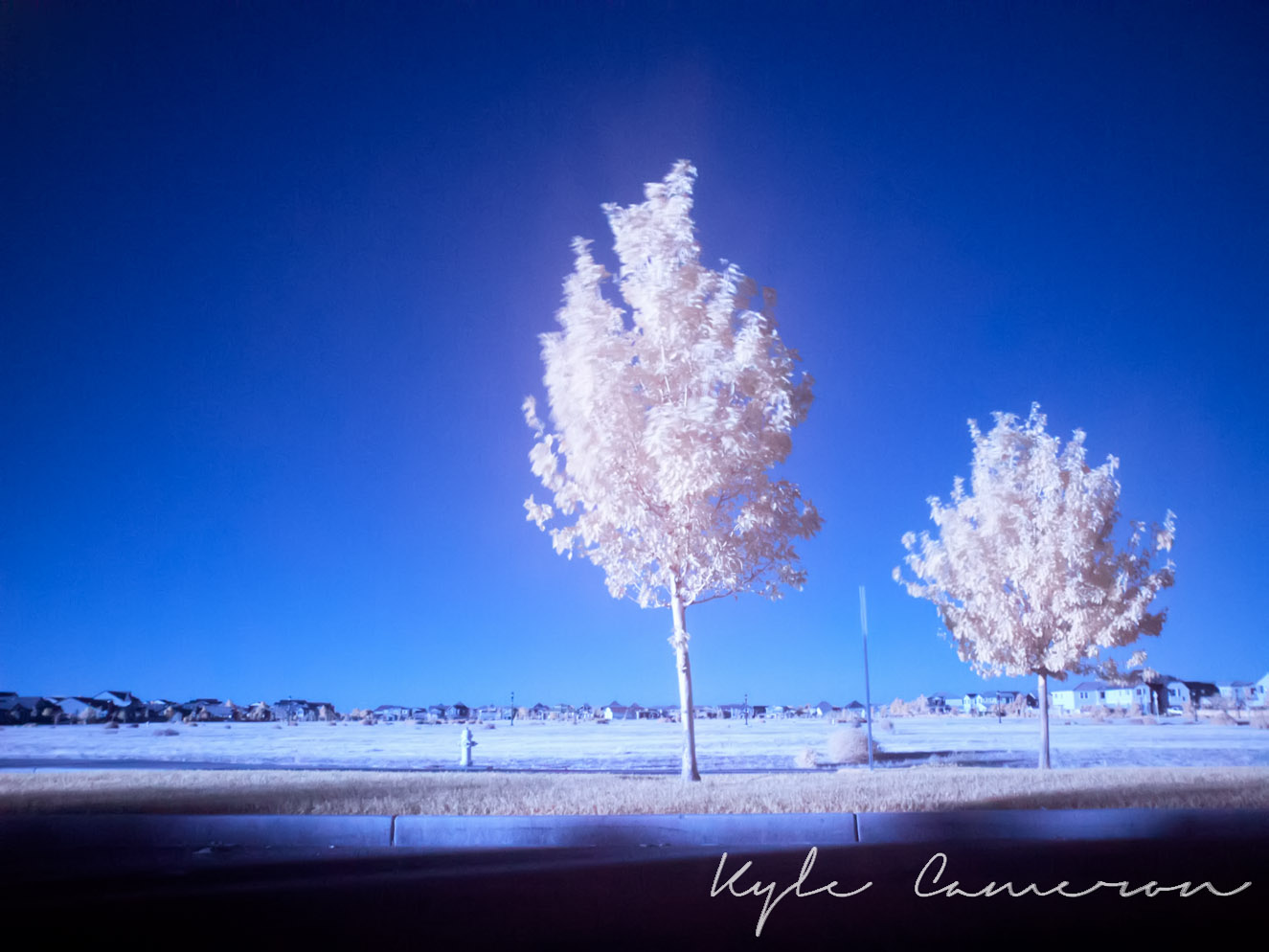 Infrared 1500x994 70 quality (5 of 10).jpg