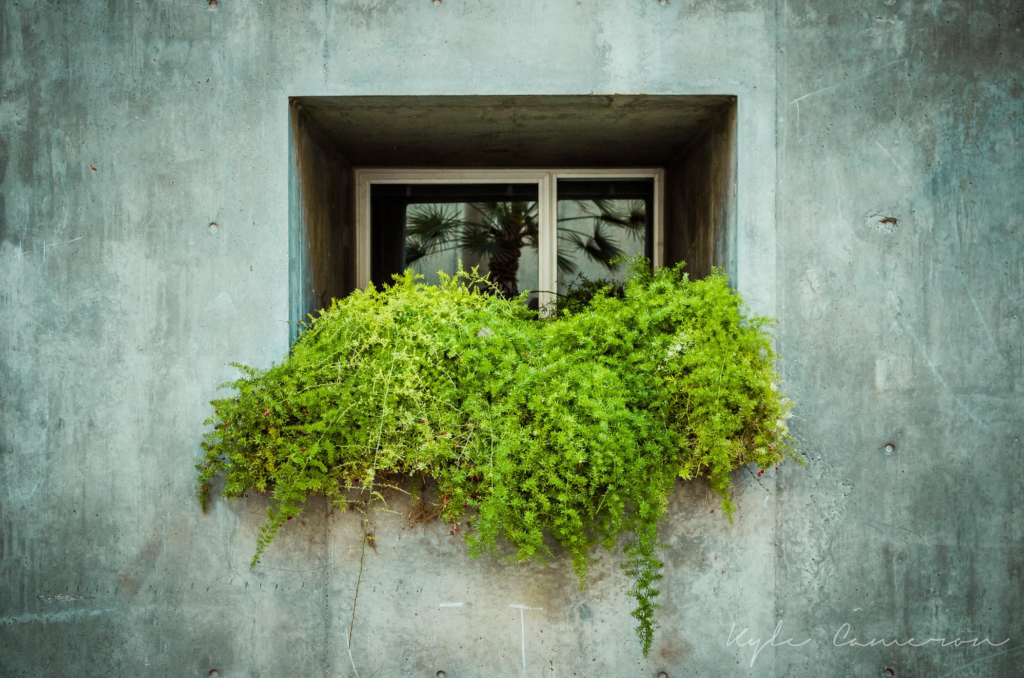 Green 01-07-2014.jpg