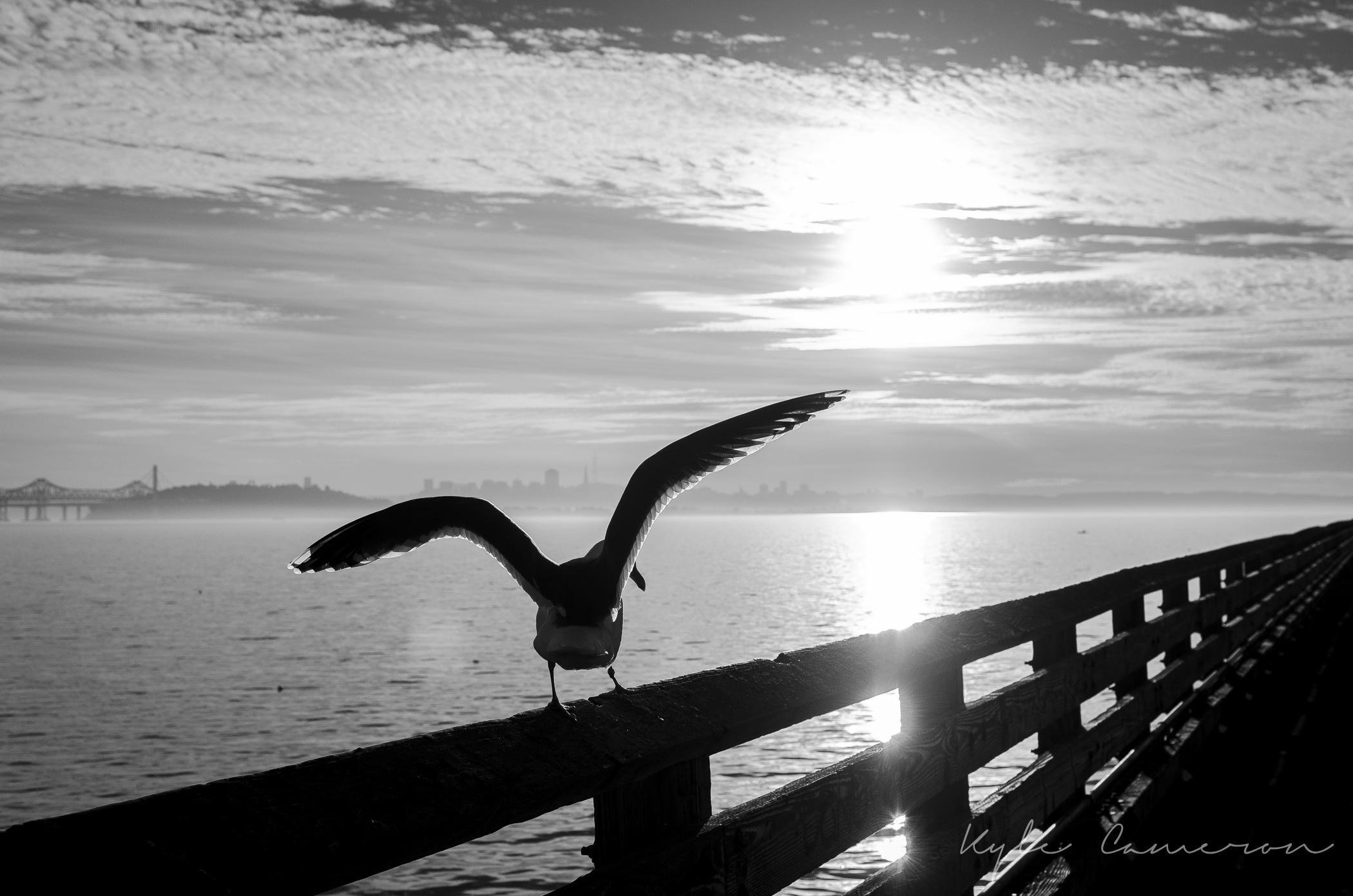 THE BIRDS 12-17-2013.jpg
