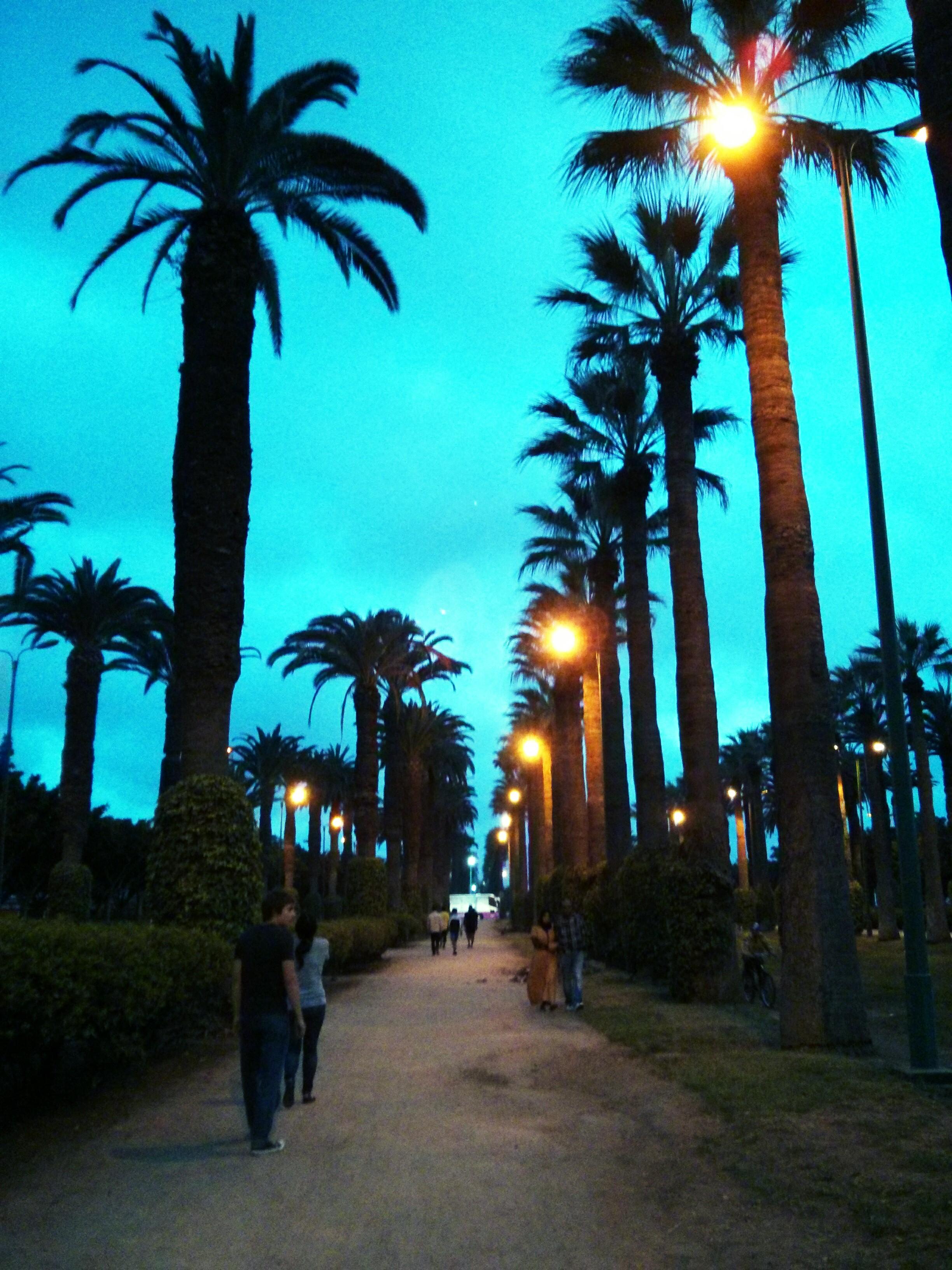 Casablancan park at dusk