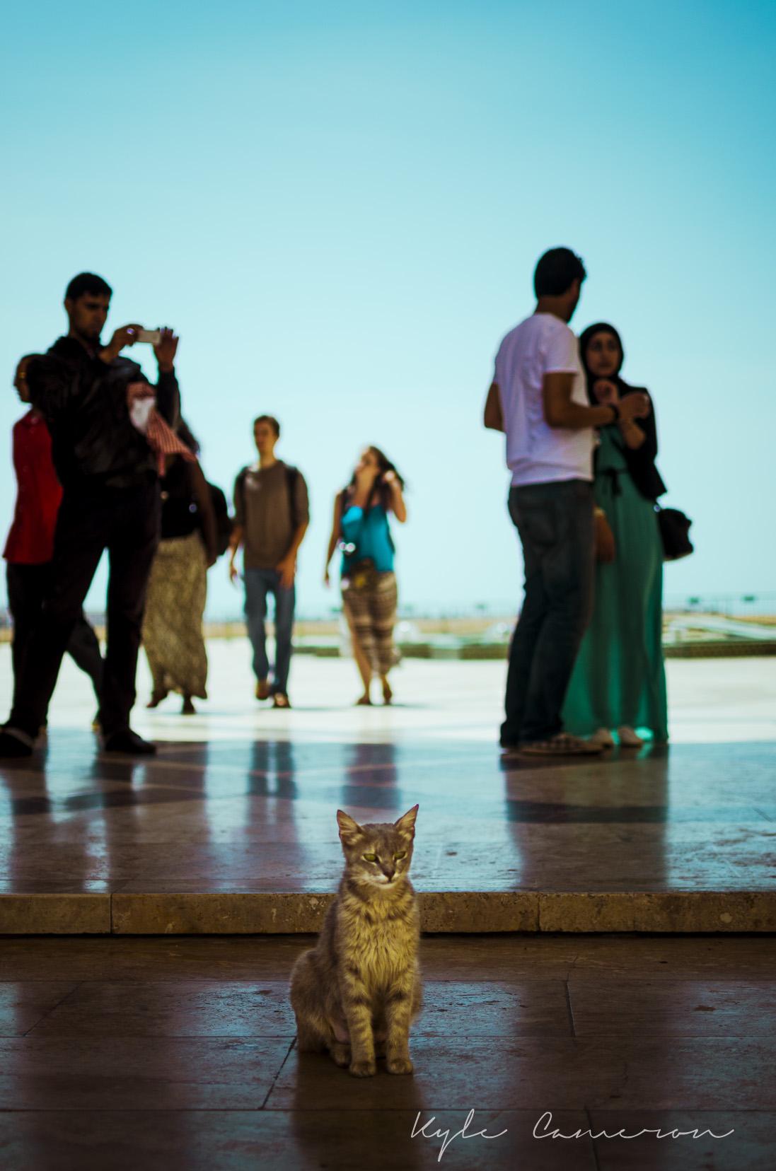 Cat vs. World