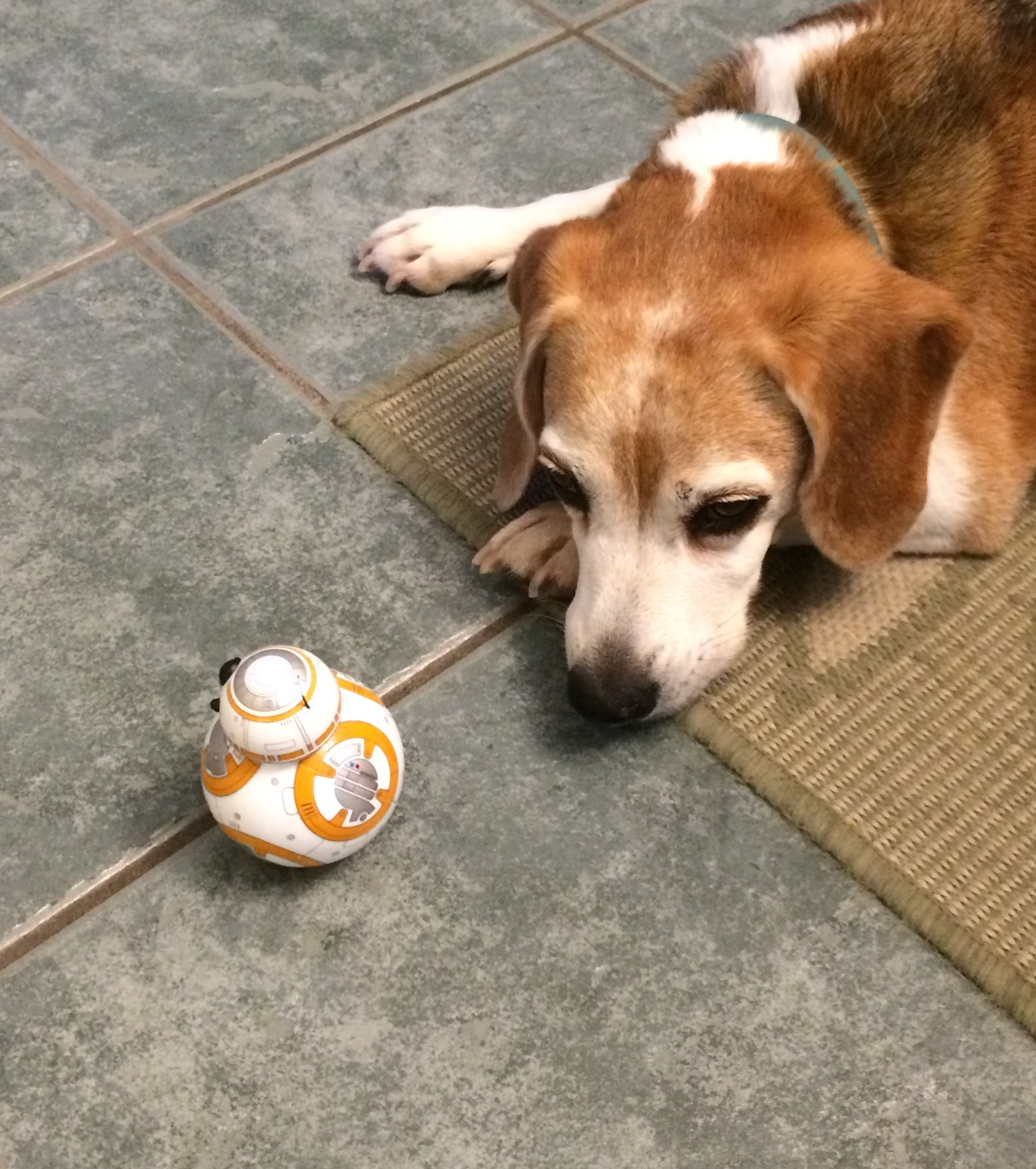My beagle thinks I'm stupid for not rolling in dead things. Or not letting her eat random mushrooms that grow in the yard. Or playing with robots when I could be throwing the tennis ball for her.