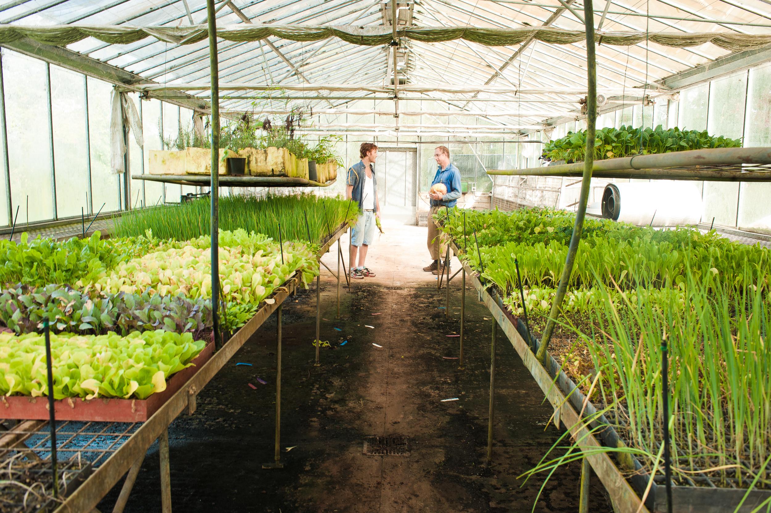 The Moonacre nursery greenhouse where creation begins.