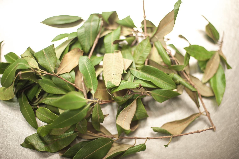 lemon myrtle leaves.jpg