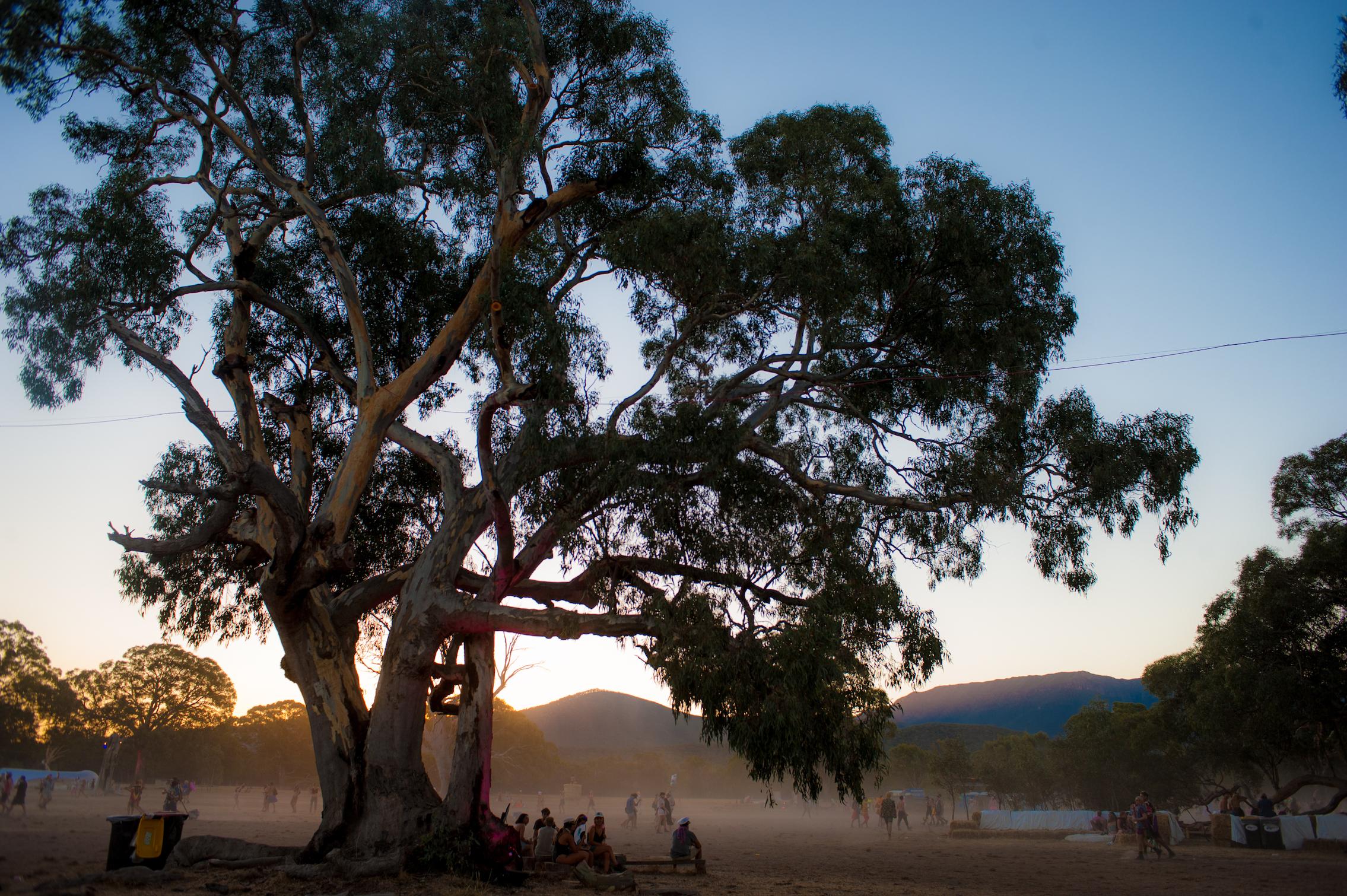 pitch festival trees trolleyd.jpg