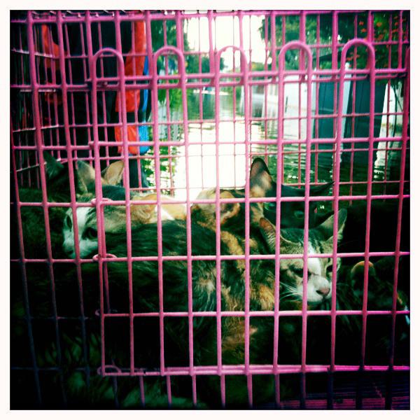 Pet rescue instagram-5.jpg