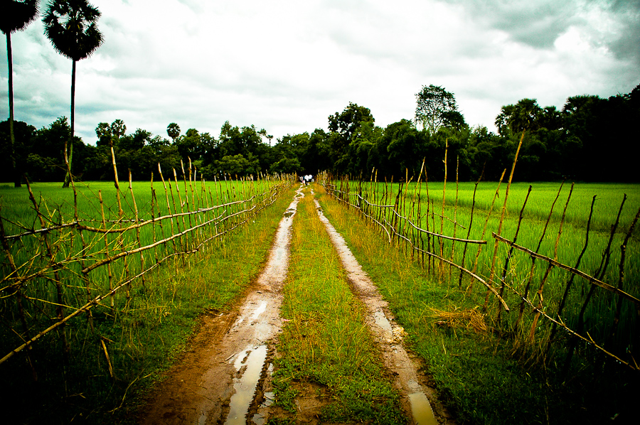A village path winds between rice paddies in central Cambodia.