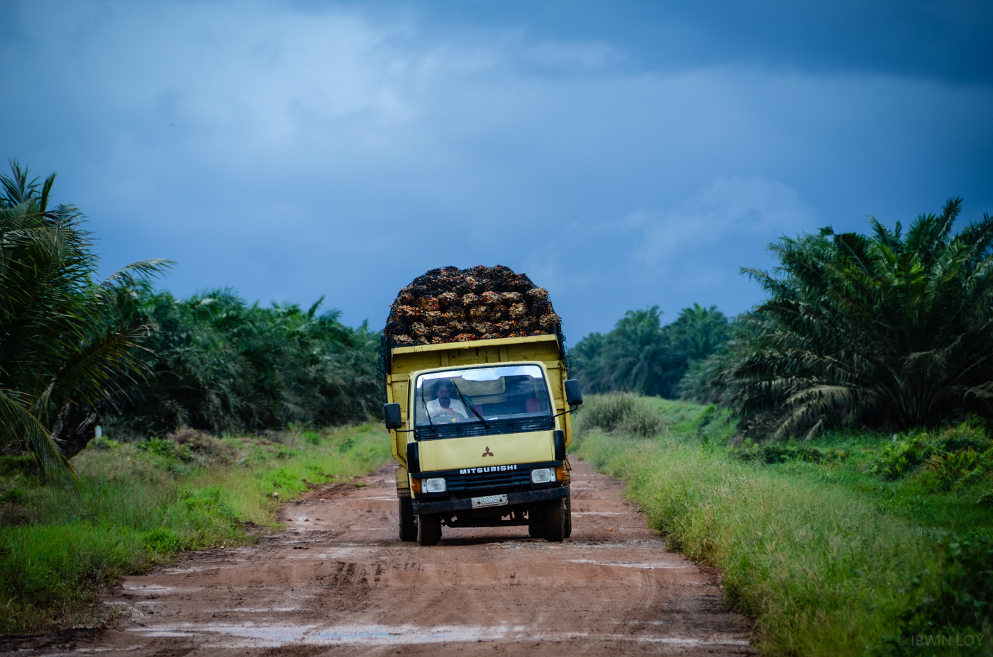 Vast swathes of land around Dayak villages are occupied by palm oil plantations.