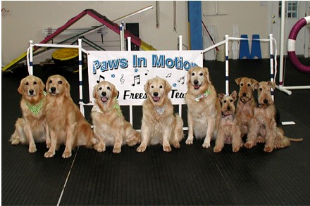 Paws in Motion Team Dogs