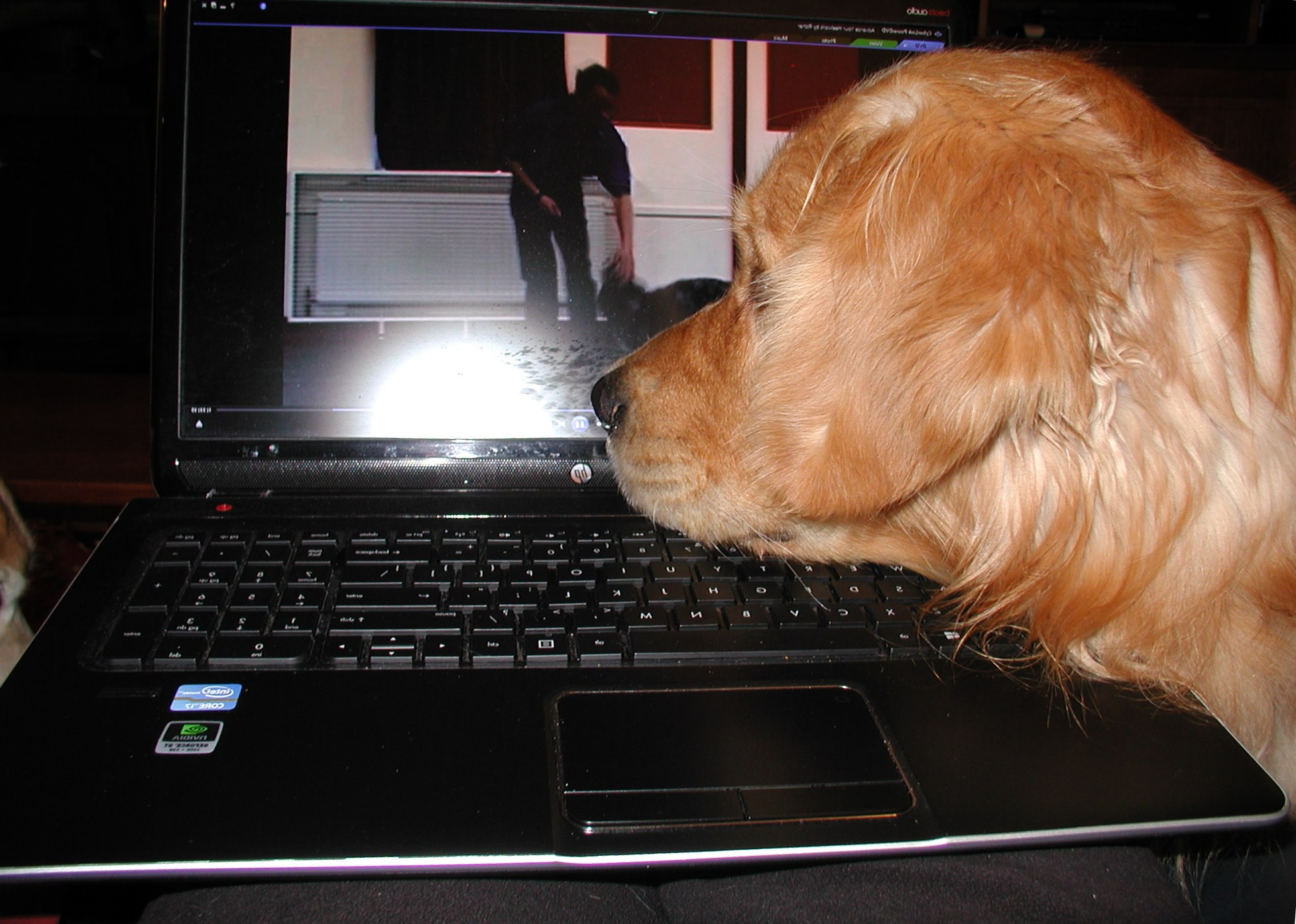 Martin is watching a Richard Curtis freestyle training video on his laptop