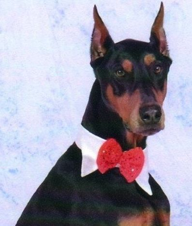 Broker and his bow tie.