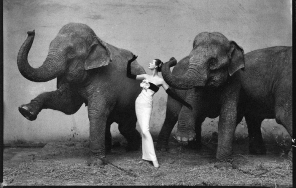 Richard Avedon's Dovima with elephants sold at auction for $1.2 million