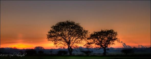 Trees near the M6, Warrington