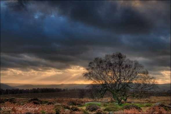 Tree in the Derwent Valley, High Peaks (Click to view larger)