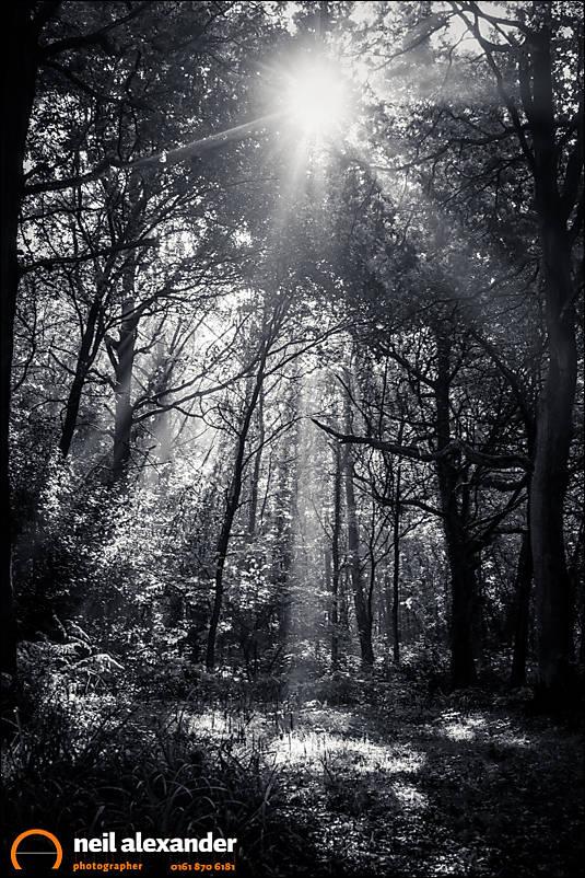Sunbank Wood Neil_Alexander 03.jpg