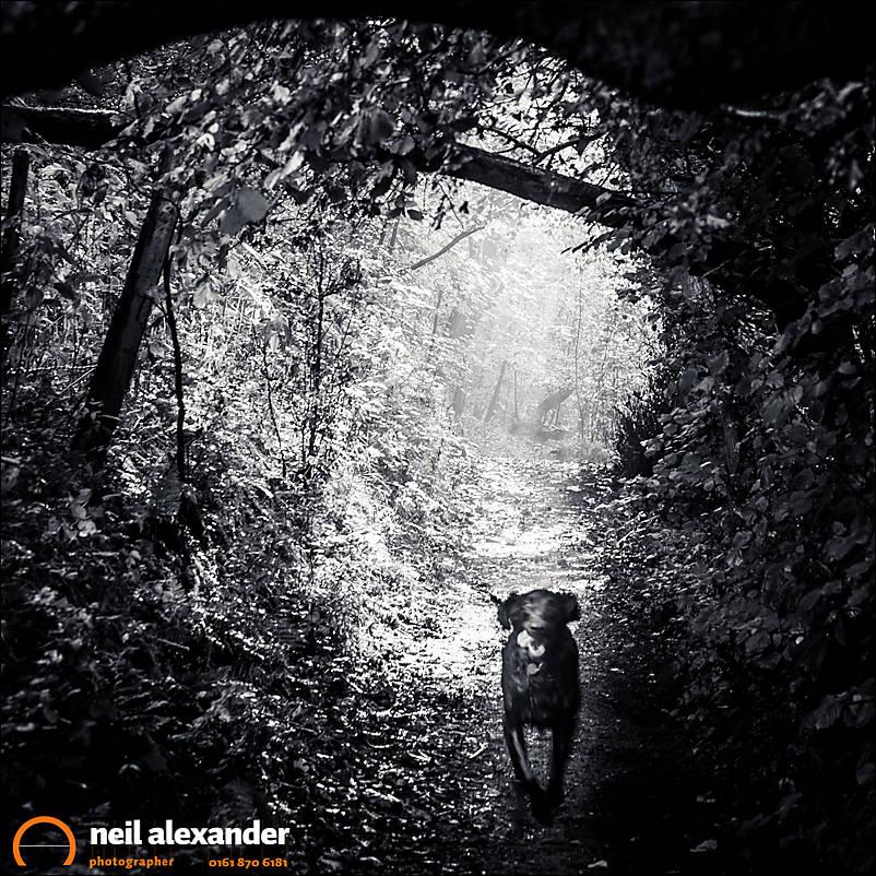 Dog in the woods Neil_Alexander 02.jpg