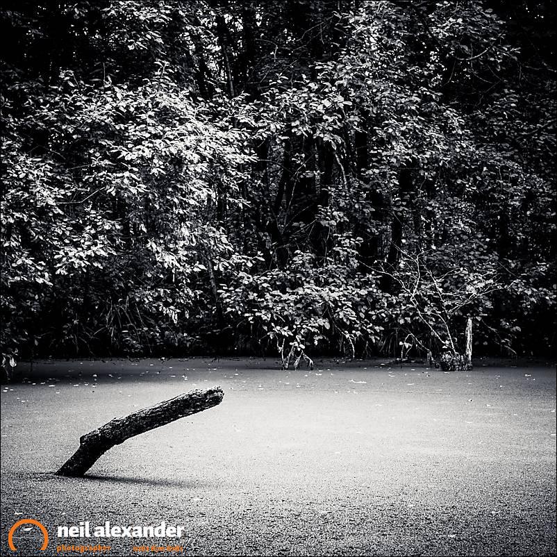 Branch in pond Neil_Alexander 01.jpg